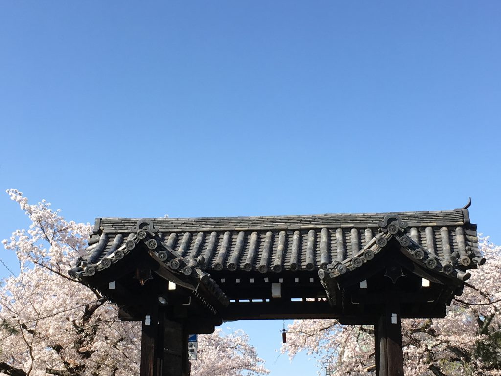 京都建仁寺と桜Kyoto Kenninji and cherry blossoms.